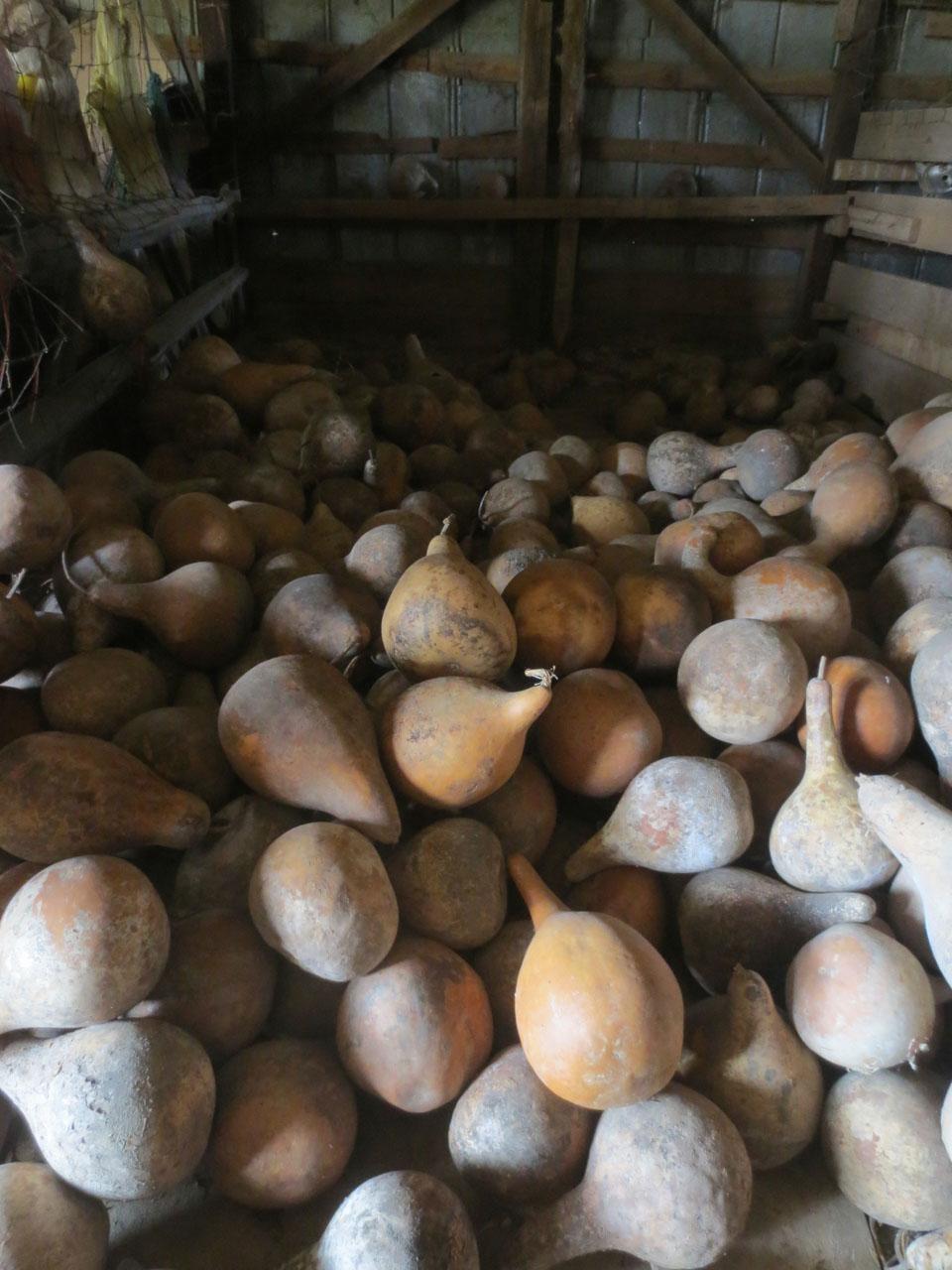 rw_gourd farm-3929.jpg