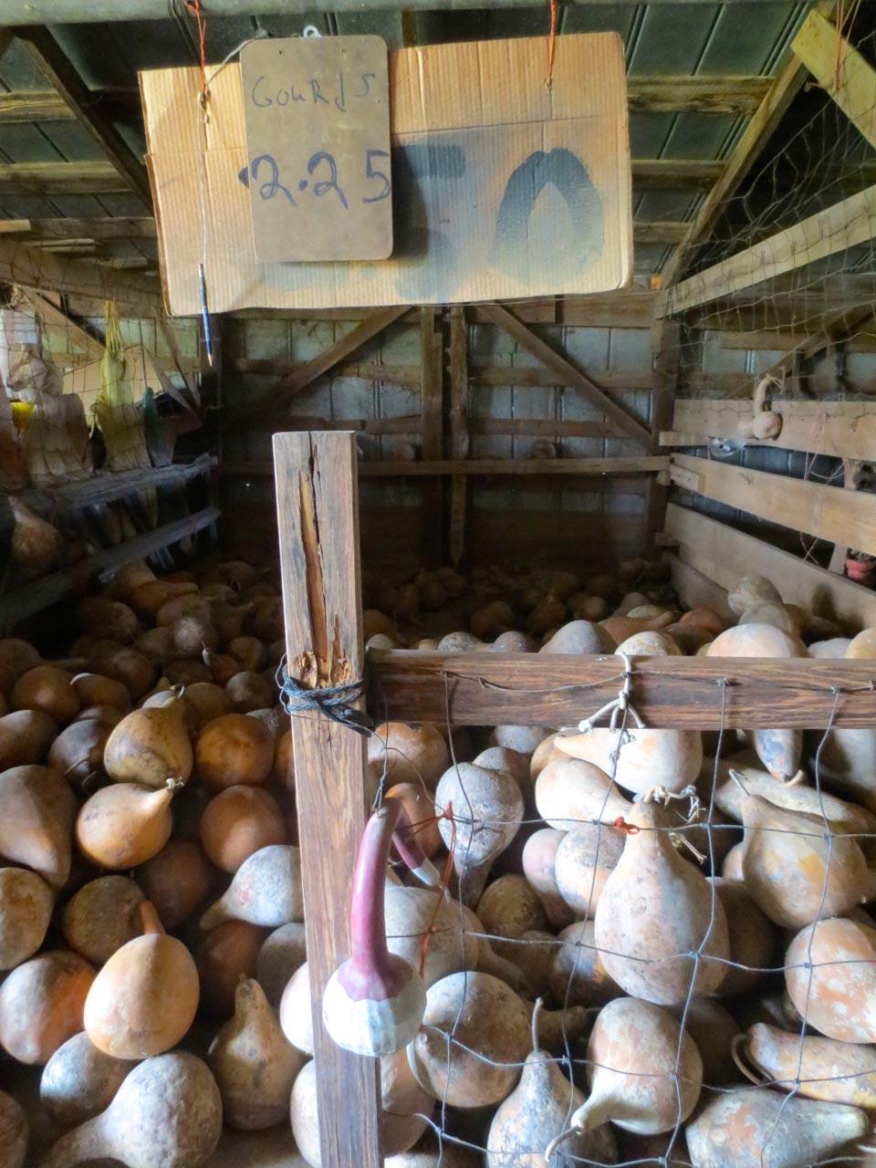 rw_gourd farm-3930.jpg