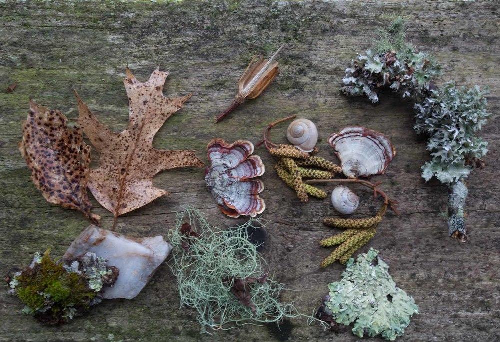 RA_woodland textures-201602206680.jpg