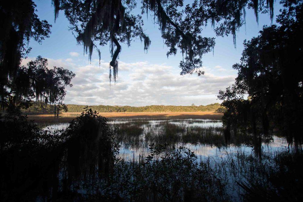 RA_florida_marsh landscape-201603088659.jpg