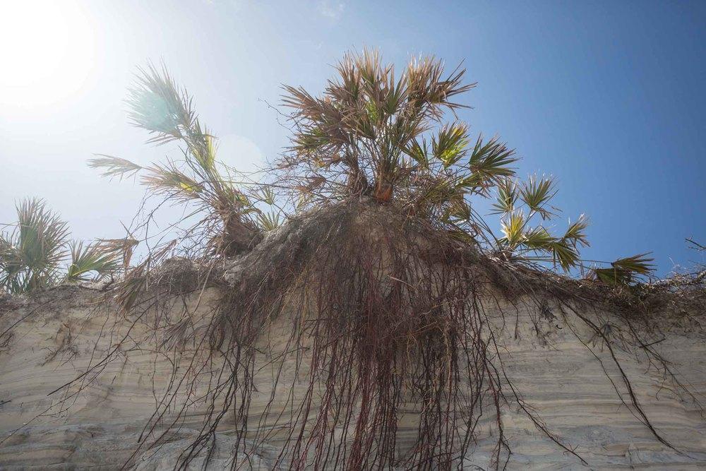 RA_florida_marsh landscape-201603088756.jpg