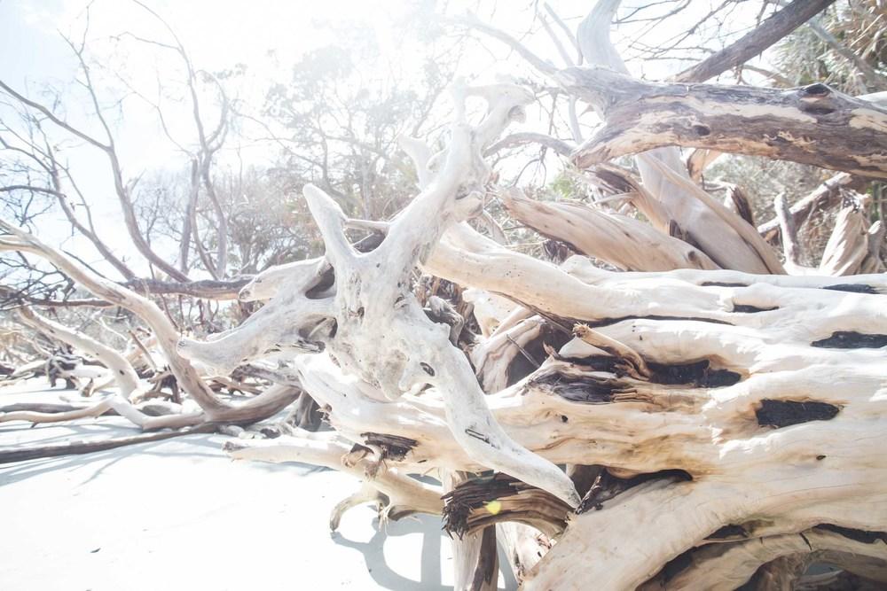 RA_florida_driftwood-201603088790.jpg
