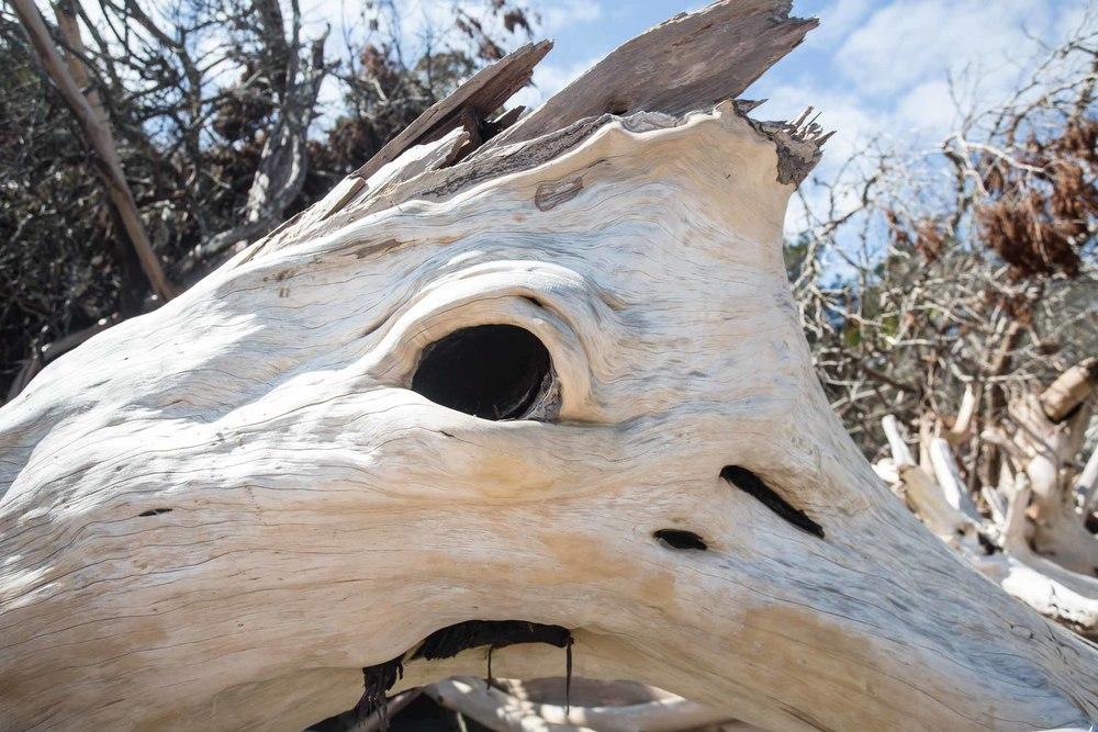 RA_florida_driftwood-201603088800.jpg