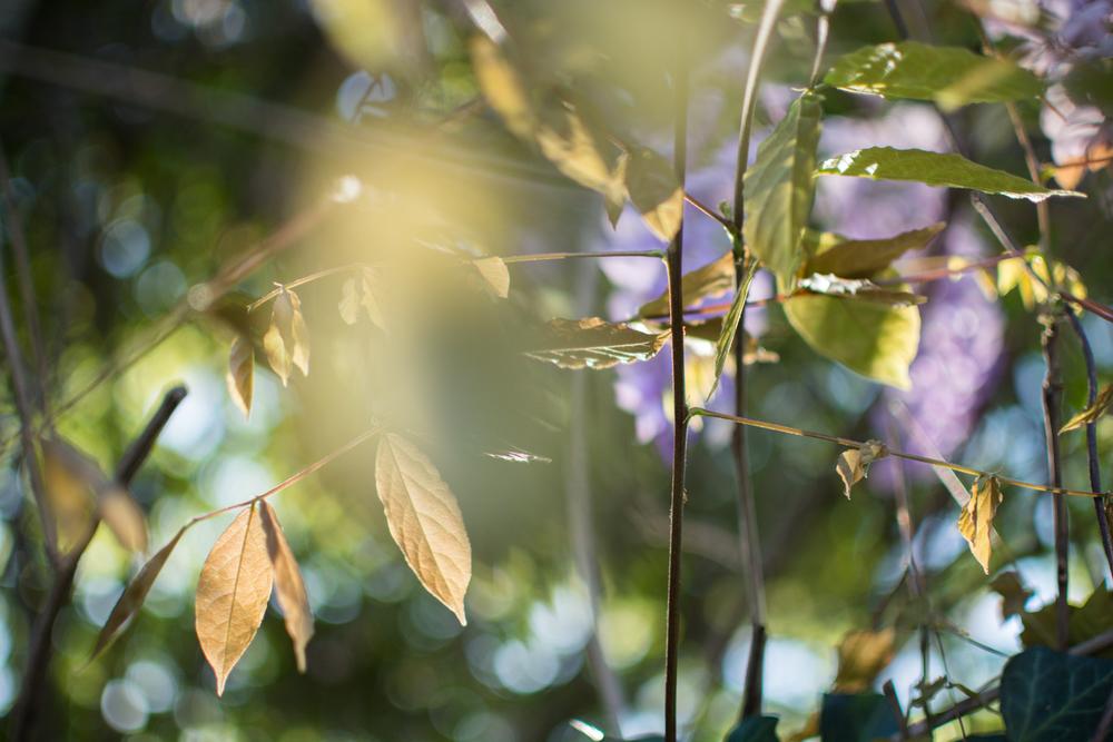 kk_wisteria-6729.jpg