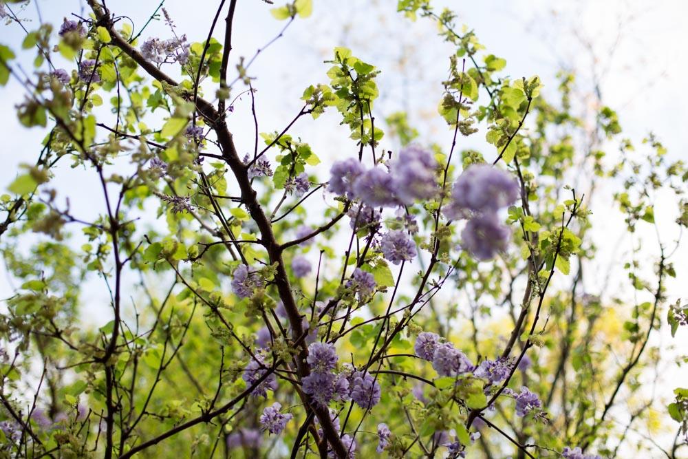 KB_wisteria-9624.jpg