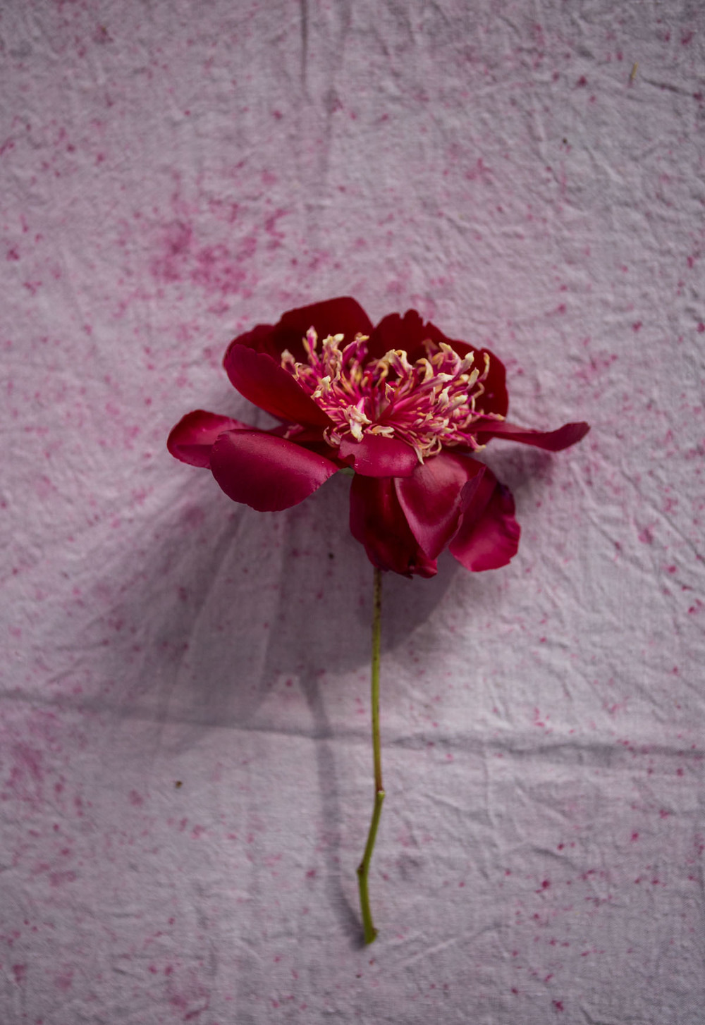 RA_spring beauty day_MANDY_-201604306610.jpg