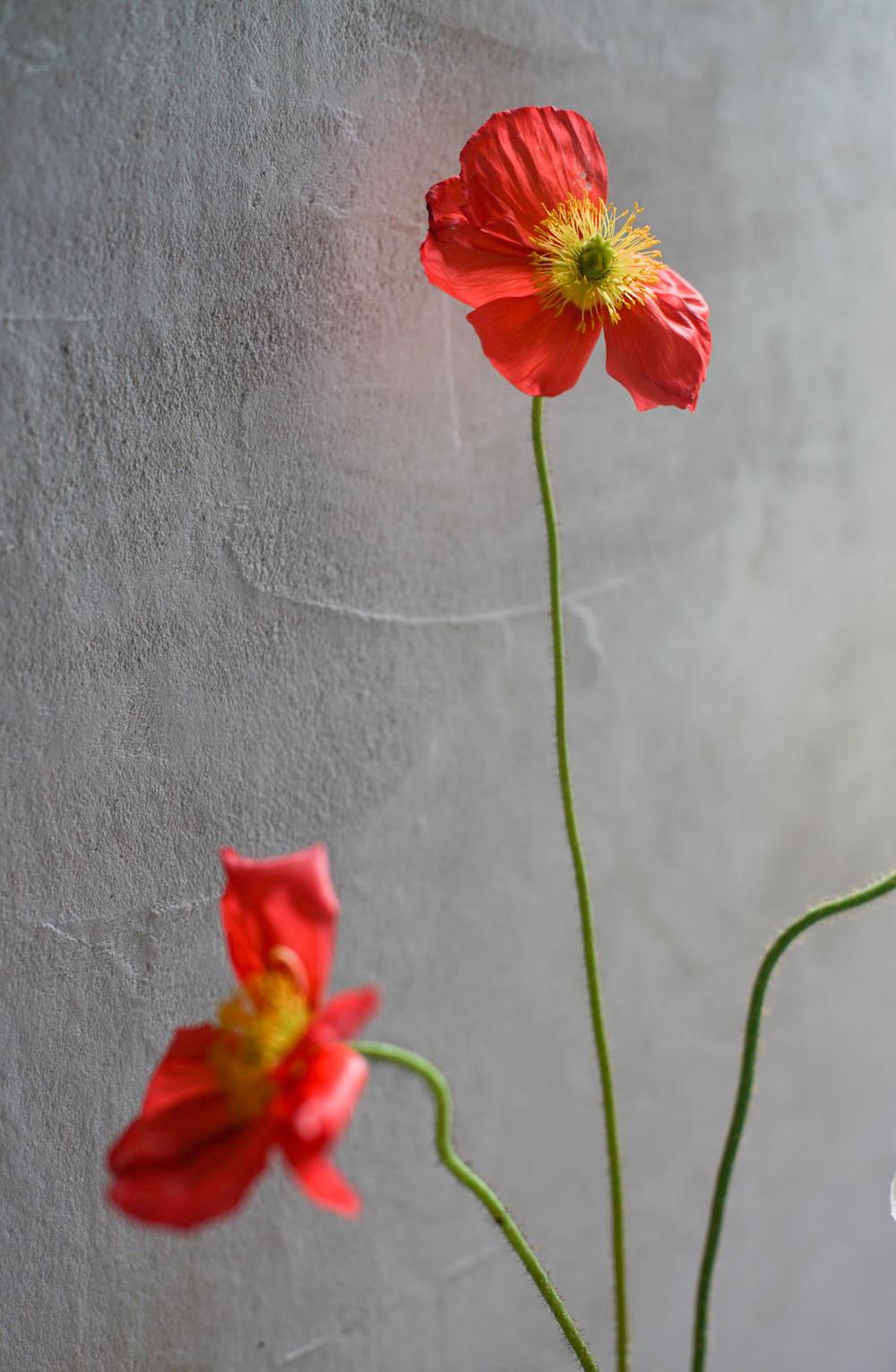 RA_poppies-2016050101931.jpg