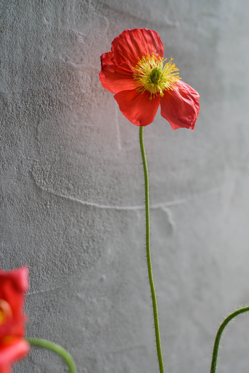RA_poppies-2016050101944.jpg
