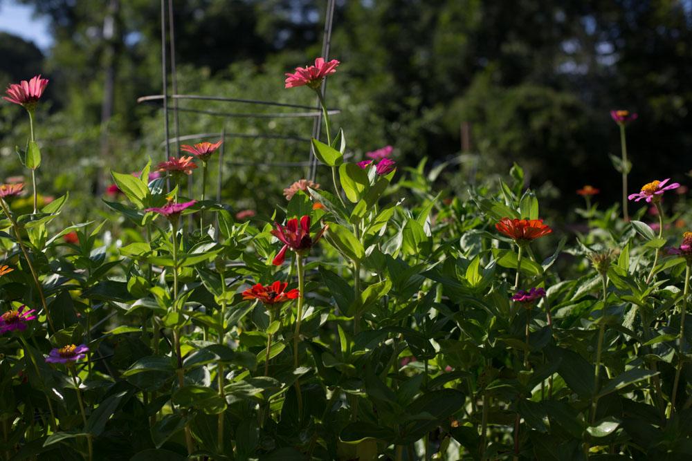 KB_winterville-community-garden-6910.jpg