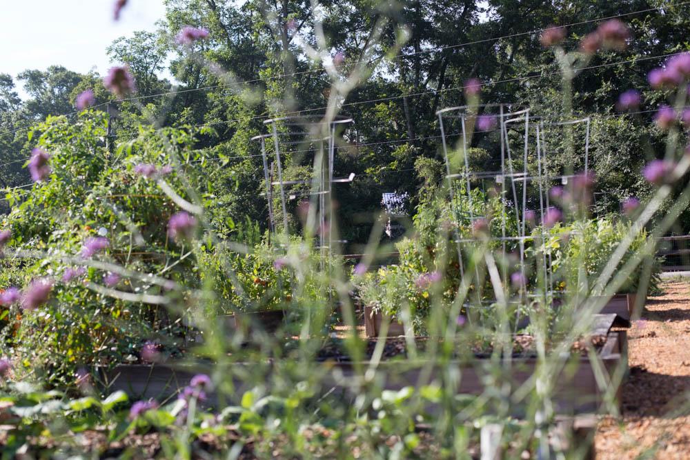 KB_winterville-community-garden-6919.jpg