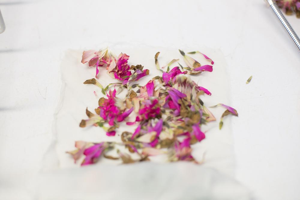 KB_dyeing-flowers-9590.jpg