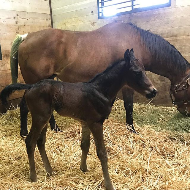 Happy Monday! Here's a new colt by #FedBiz. What a looker 👀🐎 #calbred @winstarfarm