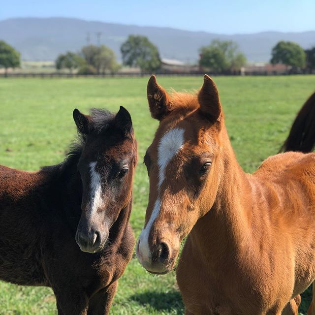 Guess who wasn't phased by 30 mph winds today....these two. #foals