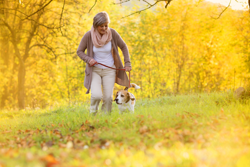 stock-photo-31645082-dog-walk.png