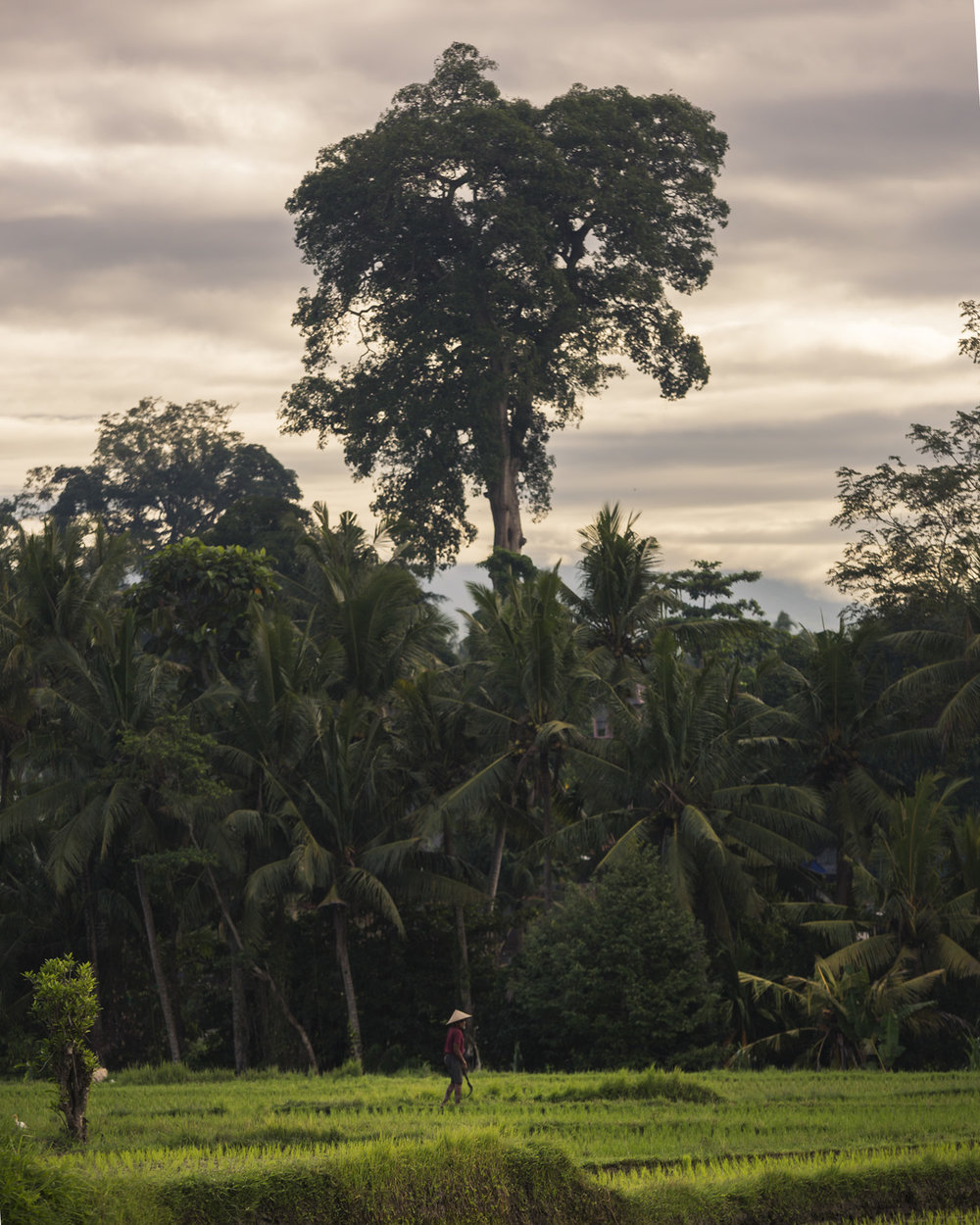 Bali 2018 (8).jpg