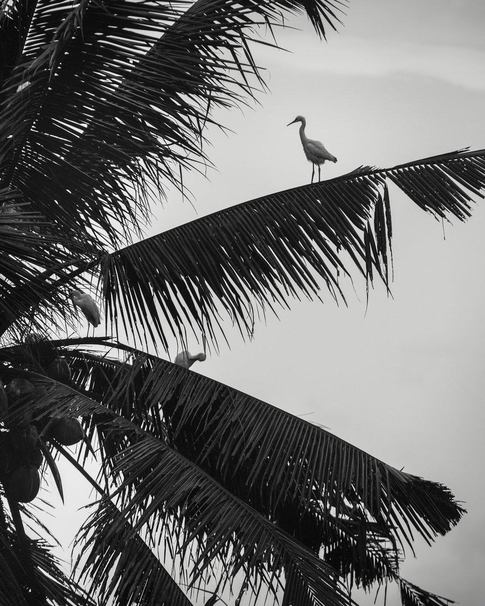 Bali 2018 (63).jpg