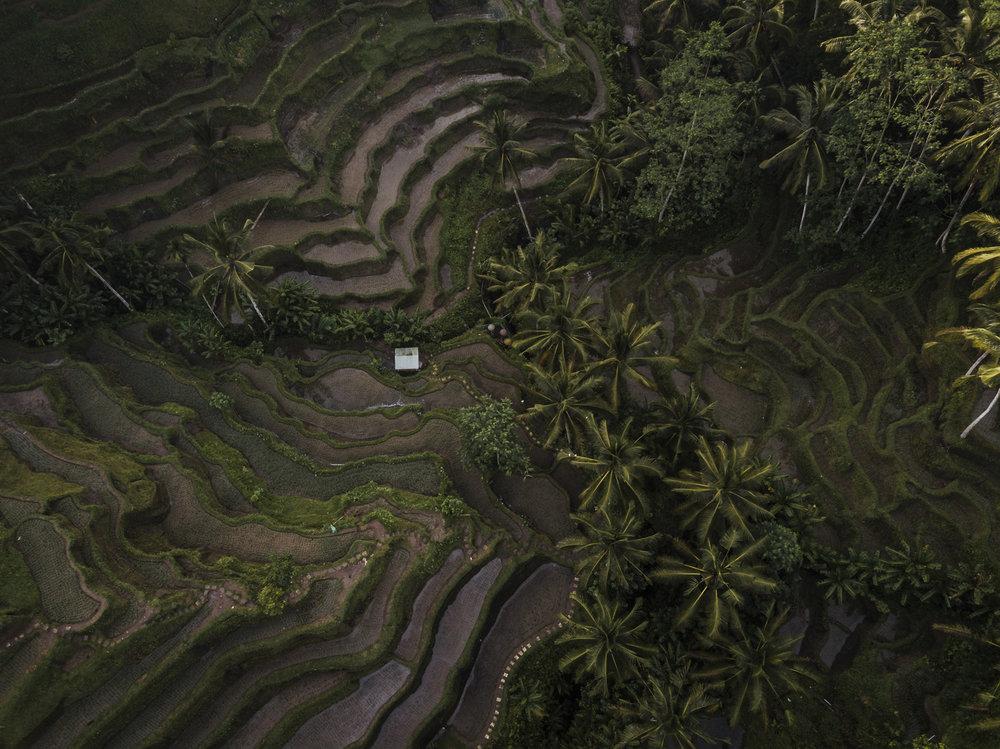 Bali 2018 (370).jpg