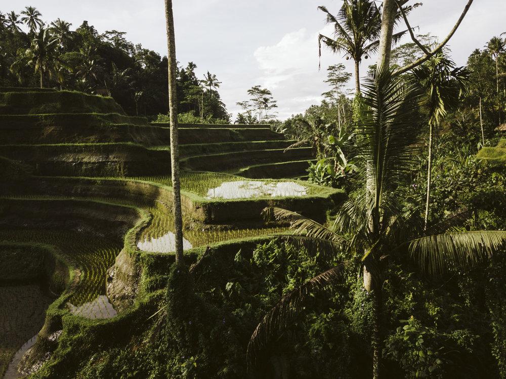 Bali 2018 (385).jpg
