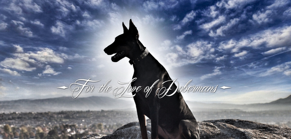 One of the many amazing photos you'll find on www.dobermanpride.com