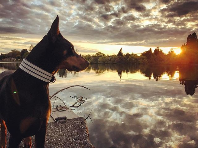 If you saw a little Asian woman doing the crouching tiger to get a shot of her Doberman at Green Lake tonight - that was me.