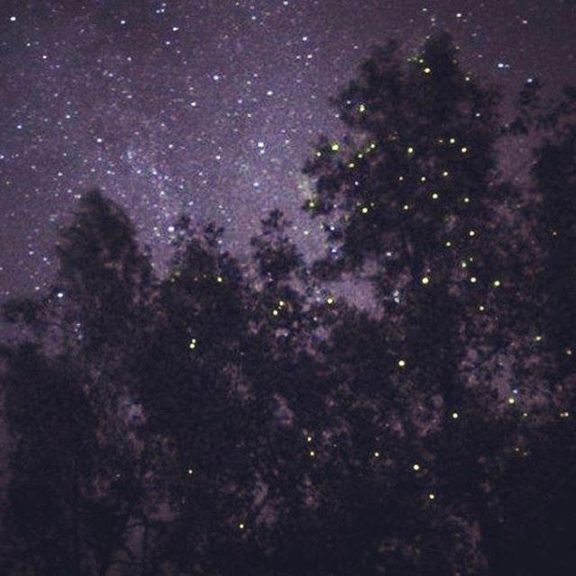 #Stars#fireflies