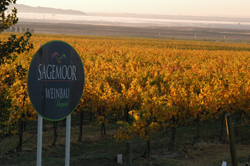 Weinbau Vineyard