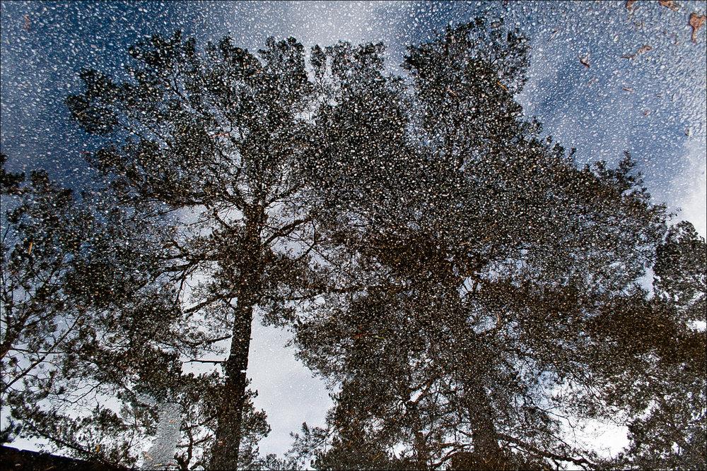 Gya Trees