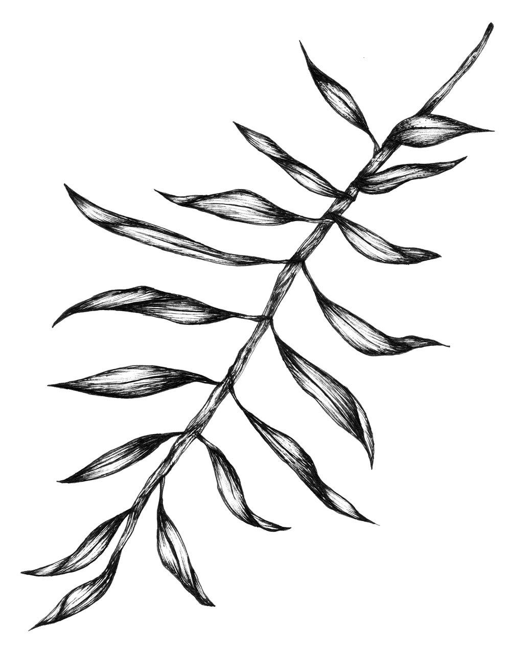 illustration2_plante.jpg