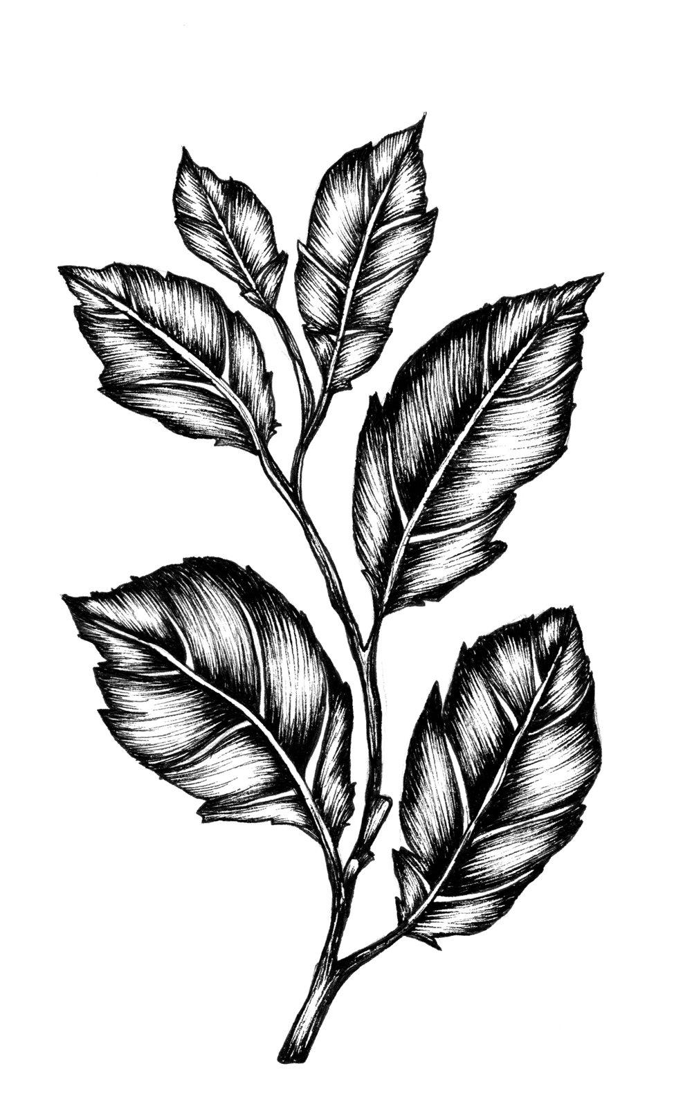 illustration17_feuilles.jpg