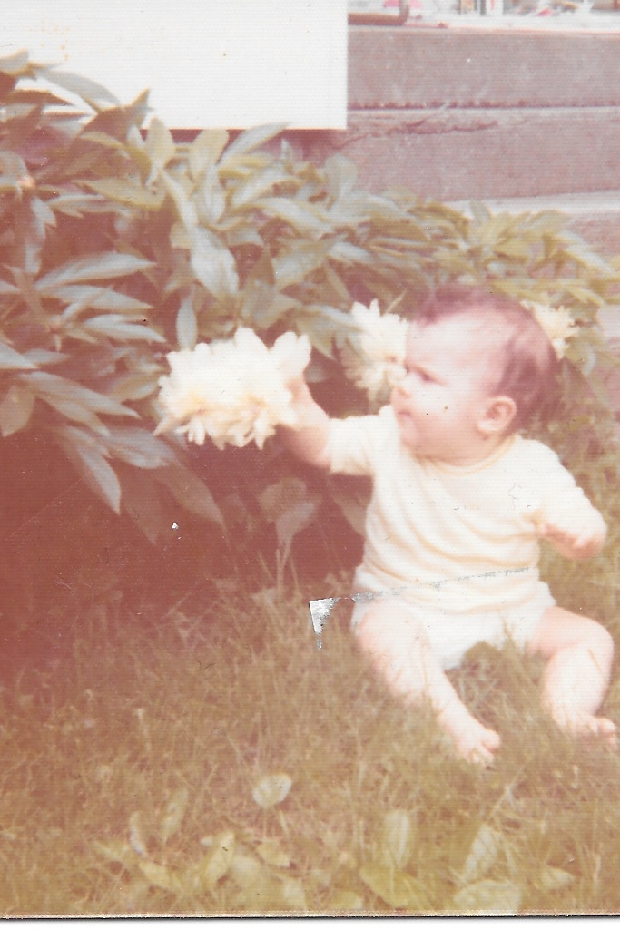 A first encounter with a Peony.