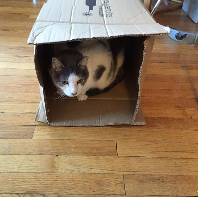 """I am...the cat...in the box!"""