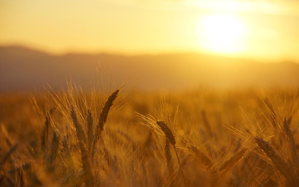 Grain.jpg