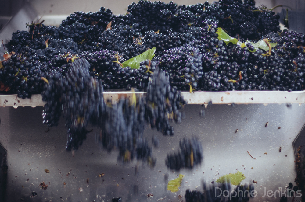 harvest-6.jpg