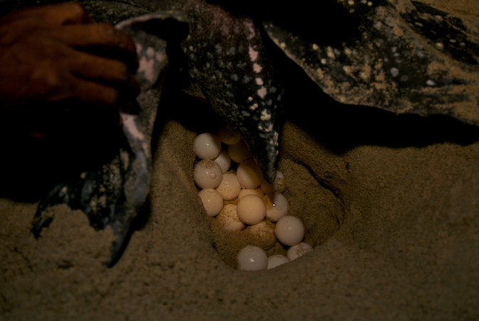 trinidad eggs.jpg