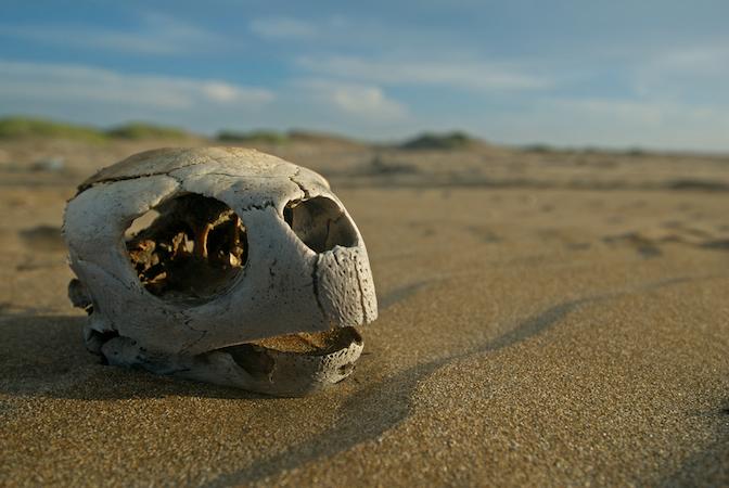 Sea Turtle Information See Turtles