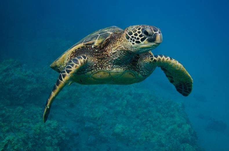 greens see turtles