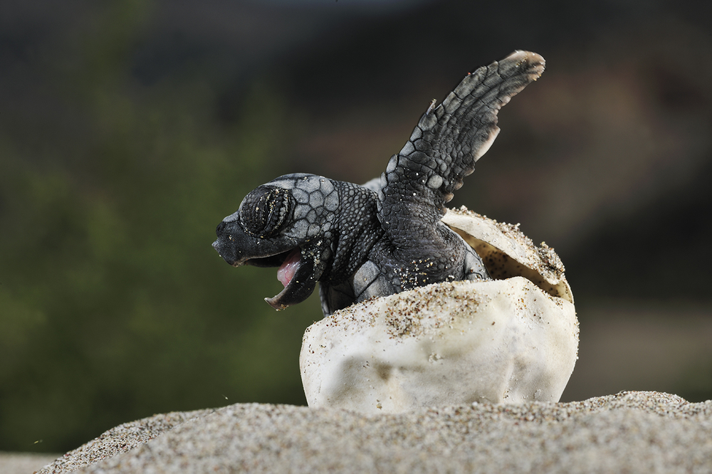Baby Turtles — SEE Turtles