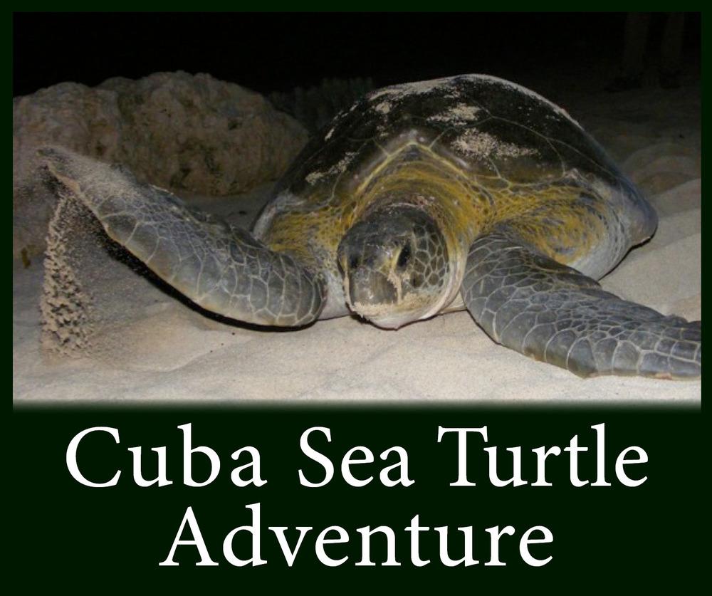 Cuba Sea Turtle Adventure Button.jpg