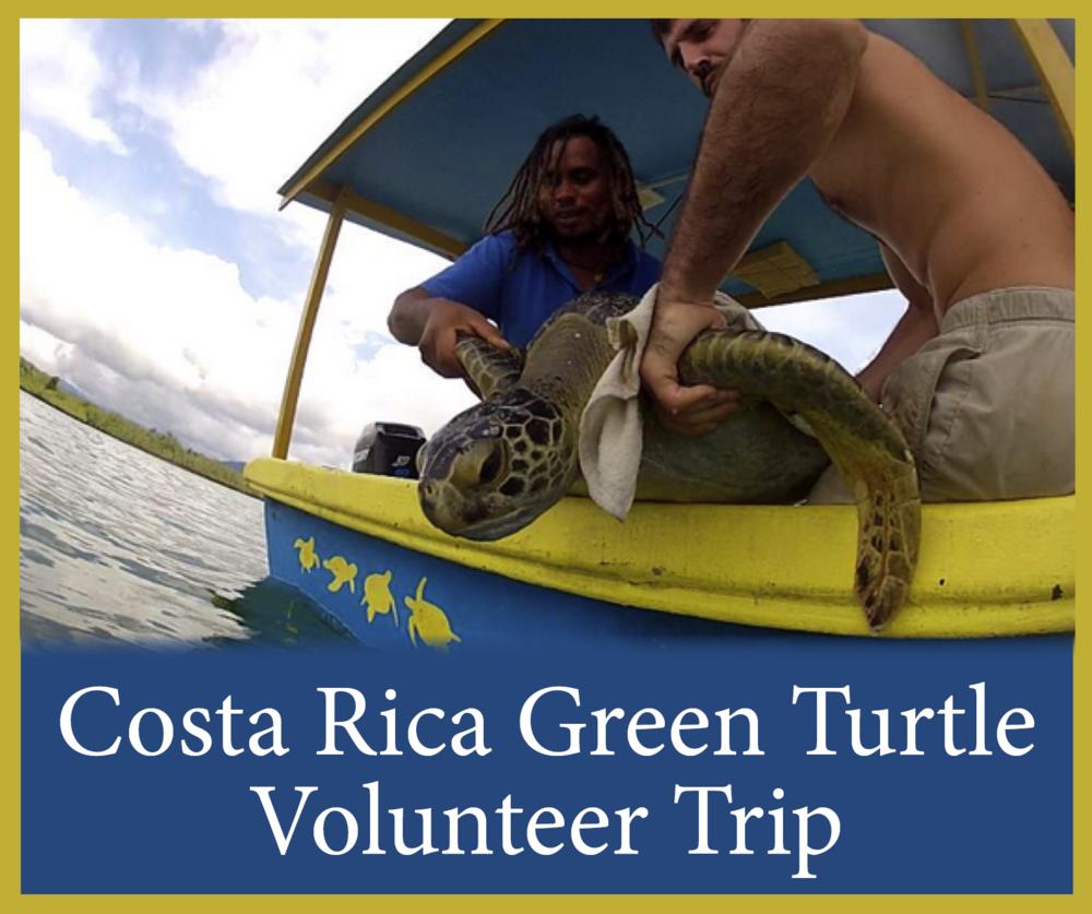 Costa Rica GREEN Turtle Trip 1.png