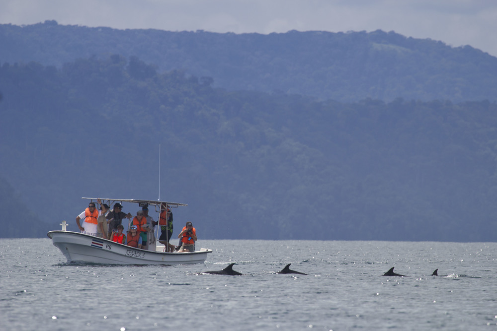 DOLPHIN WATCHING WITH CEIC (PHOTO HAL BRINDLEY)