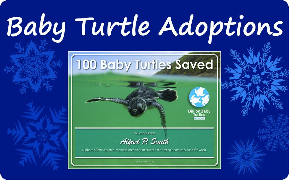 Baby Turtle Adoptions Holiday 2014.jpg