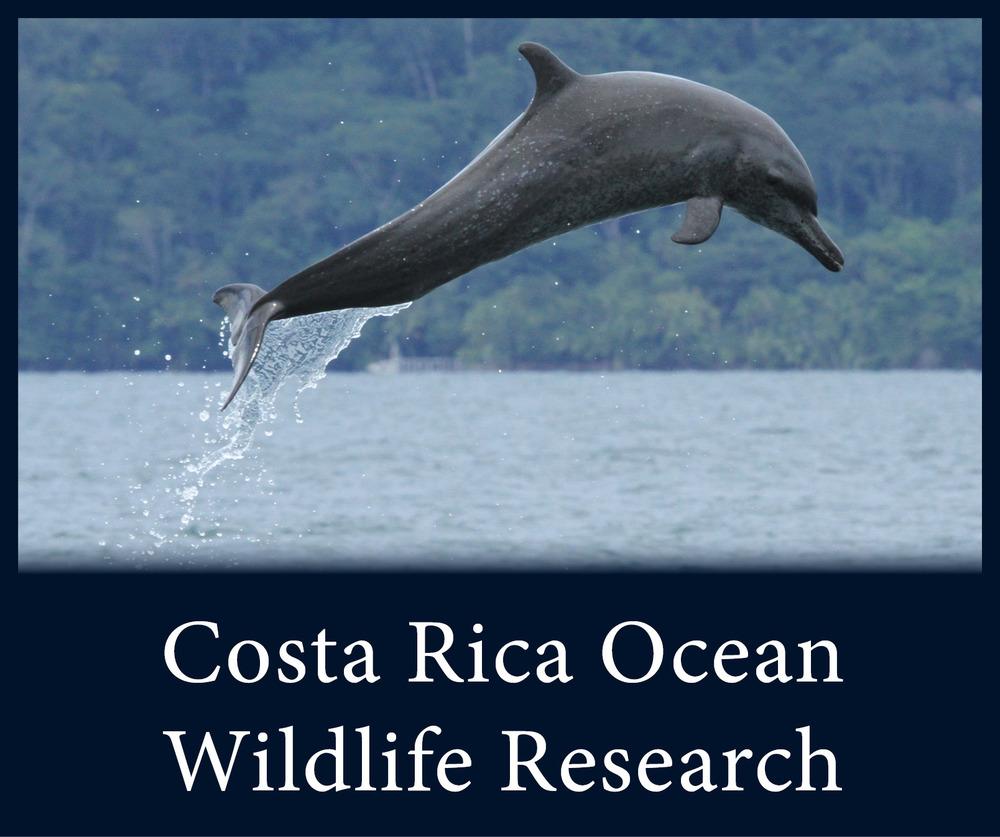 Costa Rica Ocean Wildlife Research.jpg
