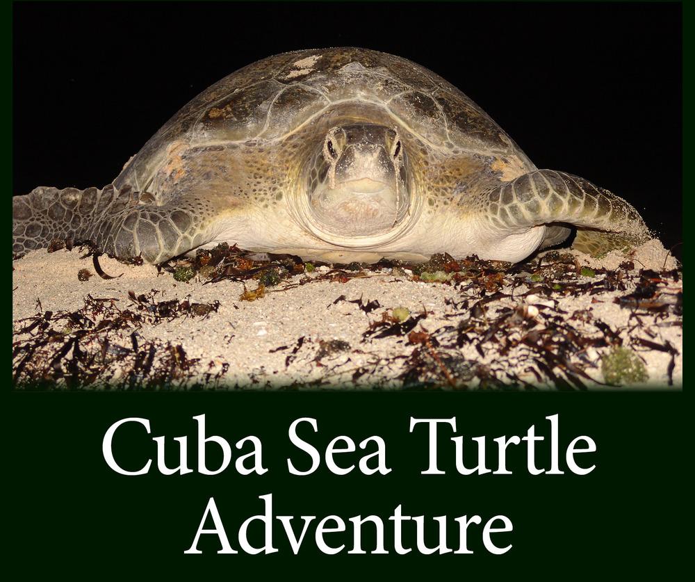 Sea Turtle Migration See Turtles