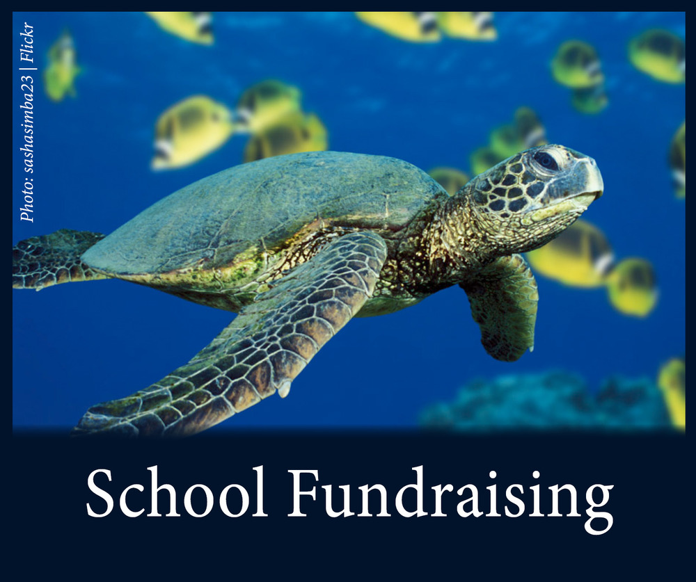 Classroom Resources See Turtles