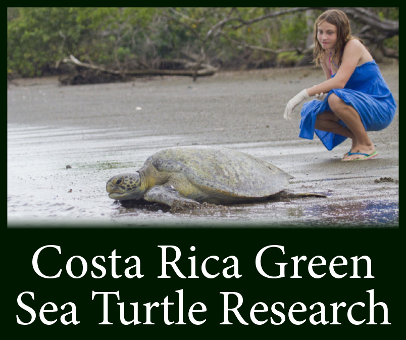 Costa Rica Leatherback Turtle Volunteer Trip See Turtles