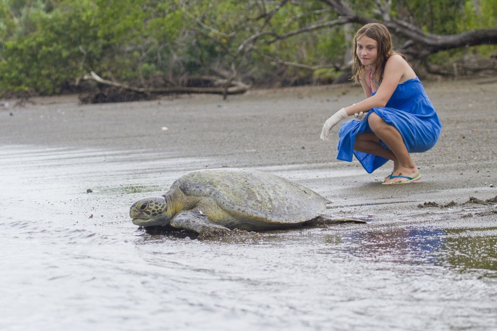 Young traveler and a green sea turtle. Photo by Hal Brindley