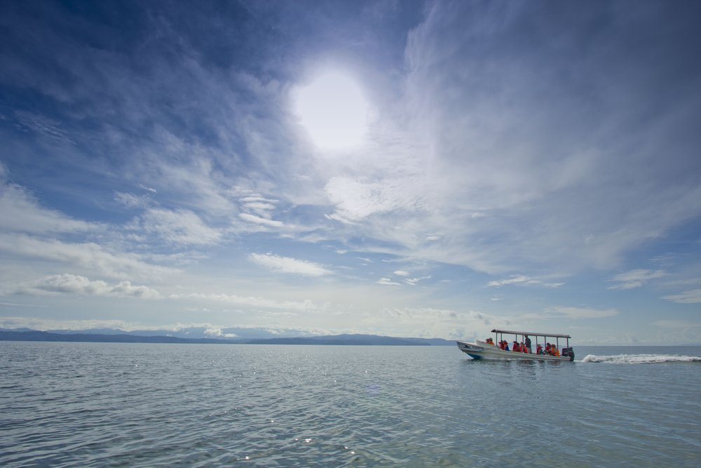 Day 3: Head out by boat into the Golfo Dulce to look for green and hawksbill sea turtles