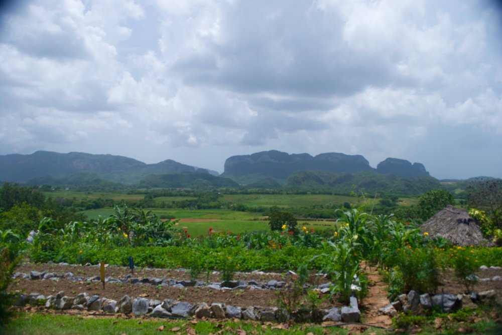 Day 3: Board your private bus and head to Viñales for lunch at an organic farm.