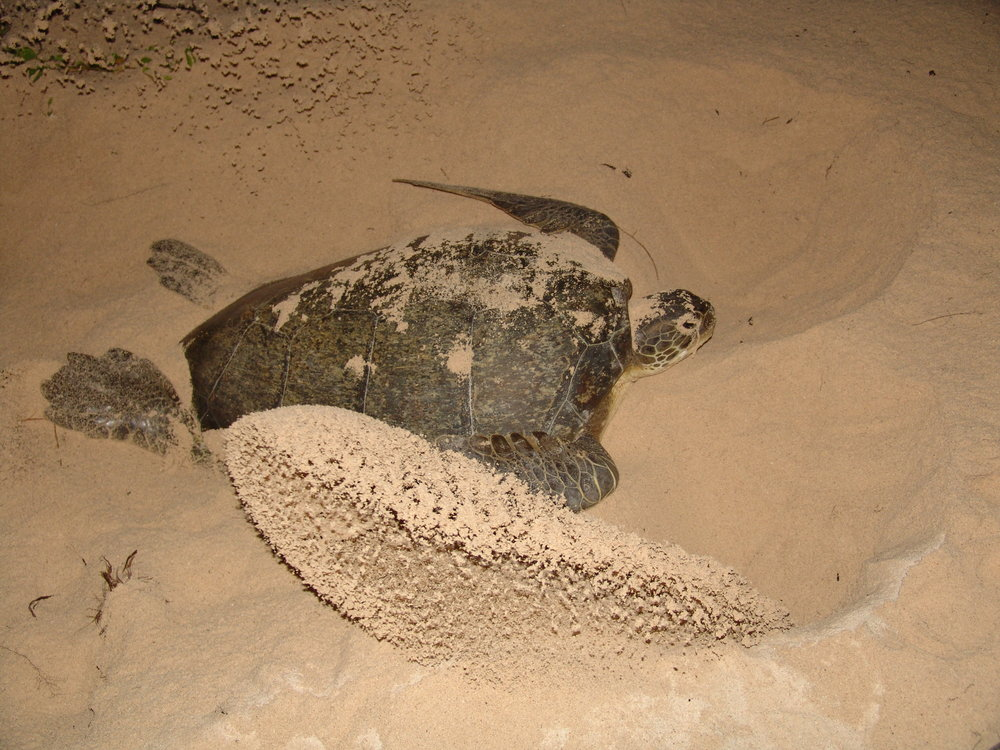 Night 6: Second night of looking for nesting turtles with local researchers.