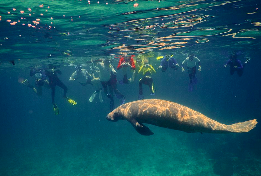 Hol Chan Marine Reserve: Visit this unique reserve to snorkel and look for turtles, manatees, coral reefs, and more